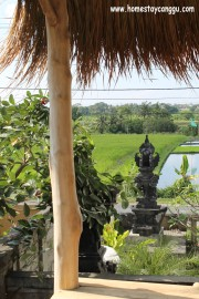 cute rice paddy field view from 2nd floor of eHomestay Wood Hut